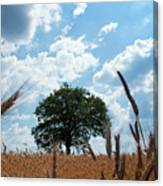 Tree In The Field Canvas Print