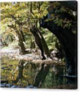 Tree In The River Canvas Print