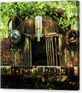 Tree In Truck Canvas Print