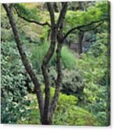 Tree Japanese Garden Canvas Print