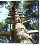 Tree Ladder Canvas Print