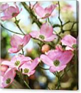 Tree Landscape Pink Dogwood Flowers Baslee Troutman Canvas Print