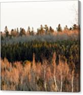 Tree Layer Cake Canvas Print