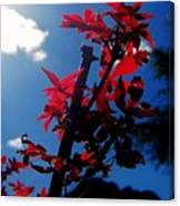 Tree Leaves Red 061814a Canvas Print