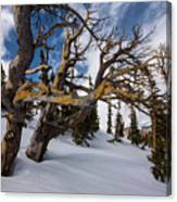 Tree Life In Winter Canvas Print