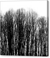 Tree Lined Canvas Print