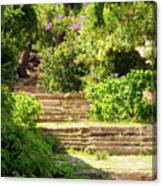 Tree Lined Steps Canvas Print