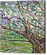Tree, Loom Of Light And Life Canvas Print