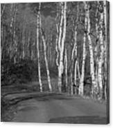 Tree Loop B And W Canvas Print