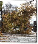 Tree Meets Hurricane Sandy By The Fair Lawn Nj Post Office Canvas Print