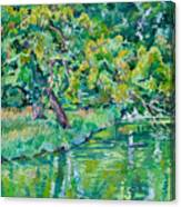 Tree Near A Pond In Lednice Castle Park Canvas Print