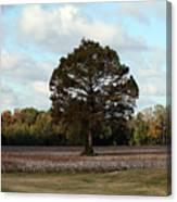 Tree No Fog Canvas Print