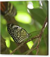 Tree Nymph Butterfly Sitting On A Tree Branch Canvas Print