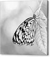 Tree Nymph - Light Canvas Print