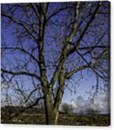 Tree Of Blue Canvas Print