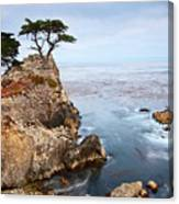 Tree Of Dreams - Lone Cypress Tree At Pebble Beach In Monterey California Canvas Print