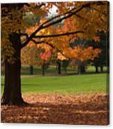 Tree Of Fall Autumn Colors Canvas Print