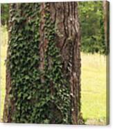Tree Of Ivy Canvas Print