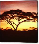 Tree Of Life Africa Canvas Print