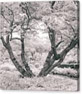 Tree Of Life II Canvas Print