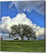 Tree Of Life Style Oak Tree And Coluds Canvas Print