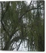 Tree Of Tears Canvas Print