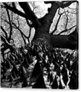 Tree Of Thorns B Canvas Print