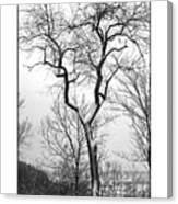 Tree On The Western Promenade Canvas Print
