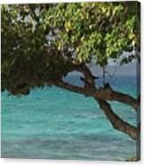 Tree Over Sapphire Beach Canvas Print