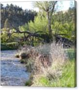 Tree Over The River Canvas Print
