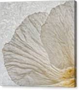 Tree Poppy Canvas Print