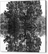 Tree Reflection In Black And White Canvas Print