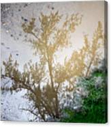 Tree Reflection Upside Down 1 Canvas Print