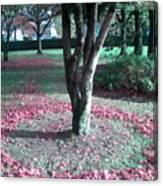 Tree Ring Canvas Print