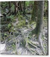 Tree Roots And Lithia Springs Canvas Print
