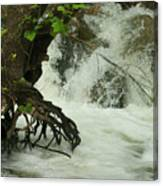 Tree Roots In The Water Canvas Print