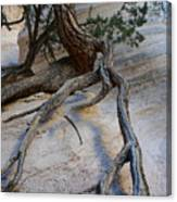 Tree Roots On The Tent Rock Canvas Print