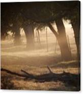 Tree Row In Morning Fog Canvas Print