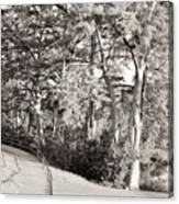 Tree Shaded Walkway Canvas Print