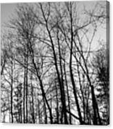Tree Silhouette Bw Canvas Print