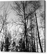 Tree Silhouette II Bw Canvas Print
