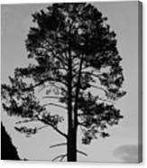 Tree Silhouette In The Dark Canvas Print