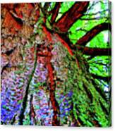 Tree Skin Canvas Print