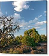 Tree Sky Utah Canvas Print