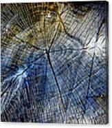 Tree Slab - 5025 Canvas Print