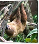 Tree Sloth Canvas Print