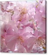 Tree Spring Pink Flower Blossoms Art Print Baslee Troutman Canvas Print