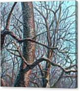 Tree Study Canvas Print