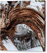 Tree Stump Arch Canvas Print