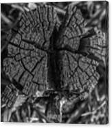 Tree Stump Black And White Canvas Print